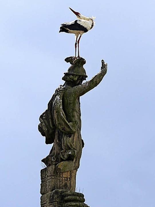 Da brat' mir einer einen Storch: der  Vogel an der Kajo   | Foto: Schneider