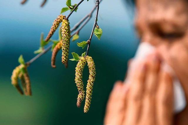 Warum die Pollenbelastung in diesem Frühling schon so stark war