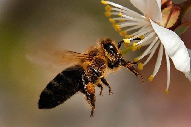 Verbot einiger Insektengifte ist nur ein kleiner Schritt