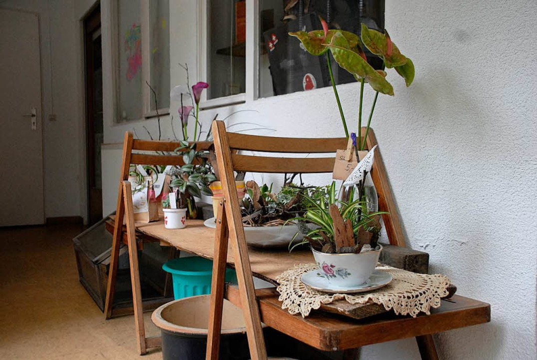 Auch Pflanzen können im Café Metamorphose erworben werden.    Foto: Leony Stabla