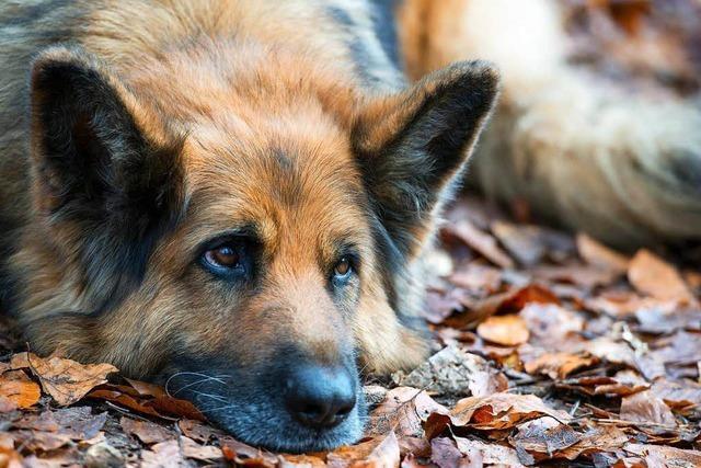 In Riegel gibt es bald ein Hundehotel mit 20 Zimmern