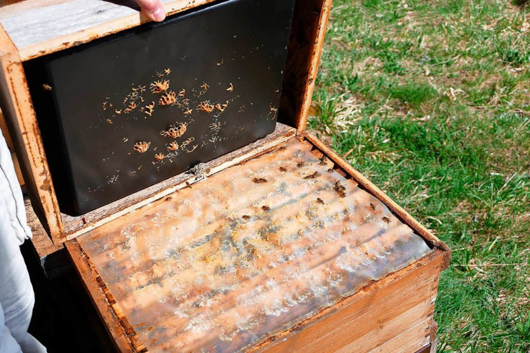 Die Beute ist das Zuhause eines Bienenvolks.  | Foto: Silas Schwab