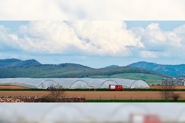 Folientunnel schützen Spargel und Erdbeeren vor Wind und Wetter