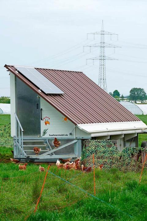 Die Hühner leben in einem mobilen Stall.  | Foto: Nikola Vogt