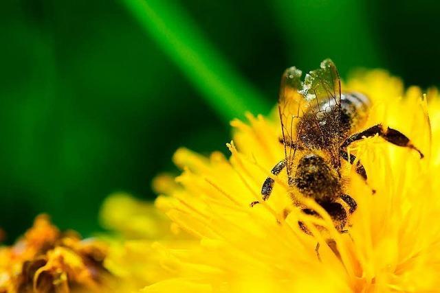 Experte bezweifelt Vorteile des Pestizidverbotes für Bienen