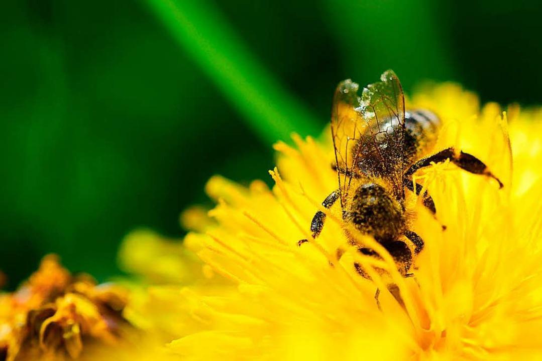 Bienen bei der Arbeit.    Foto: dpa