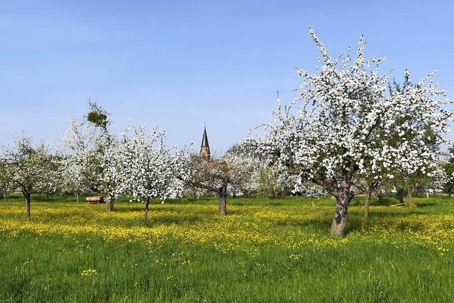 Blütenpracht vor Nonnenweier