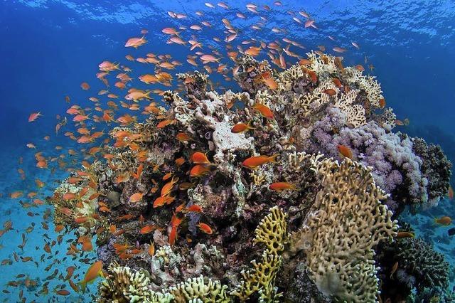 Millionen für Schutz des Great Barrier Reef