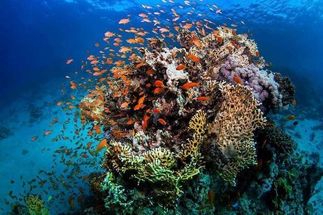 Was bedroht Korallen?
