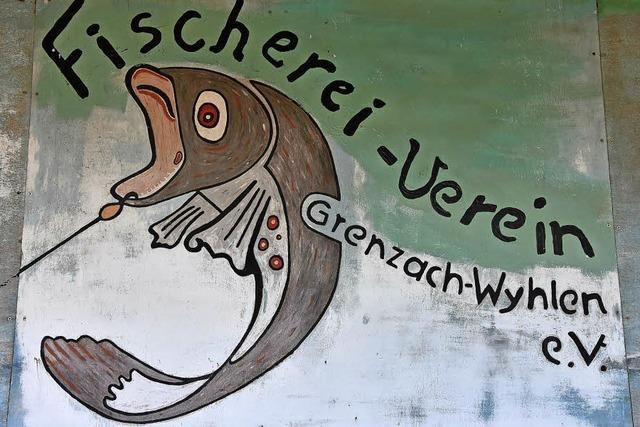 Rheinfische machen sich rar
