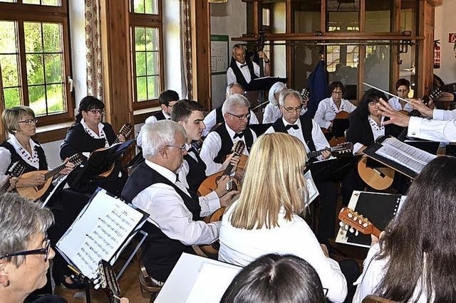 Musiker zeigen ihr Können an den Saiten