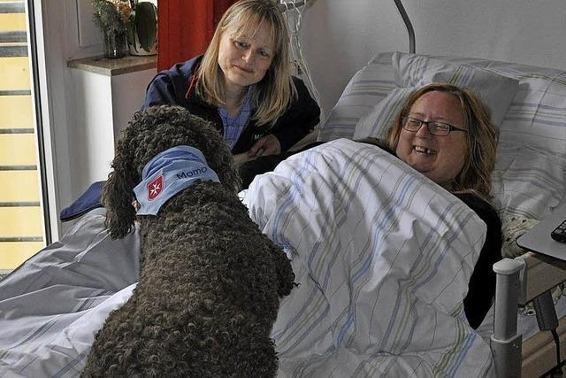Hund mit Malteser-Halstuch