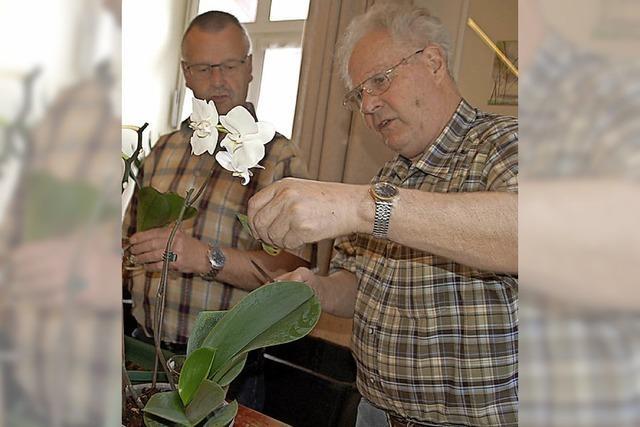 Das Reich der Orchideen treibt viele Blüten