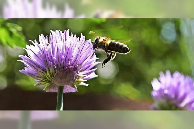 Garten und Natur in Balance