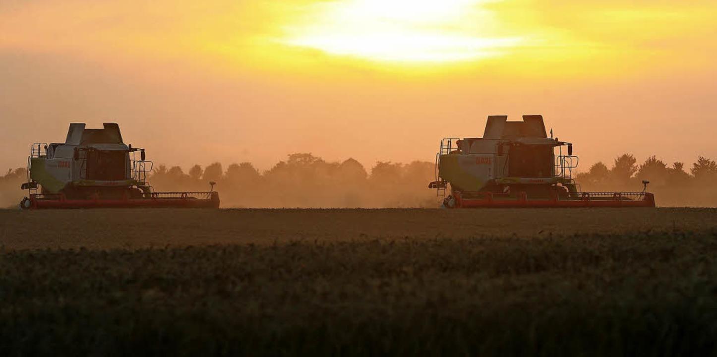 Keine Agrarindustrie, aber auch keine ...In Tunsel wird ein neuer Weg gesucht.   | Foto: Jens Wolf (dpa)