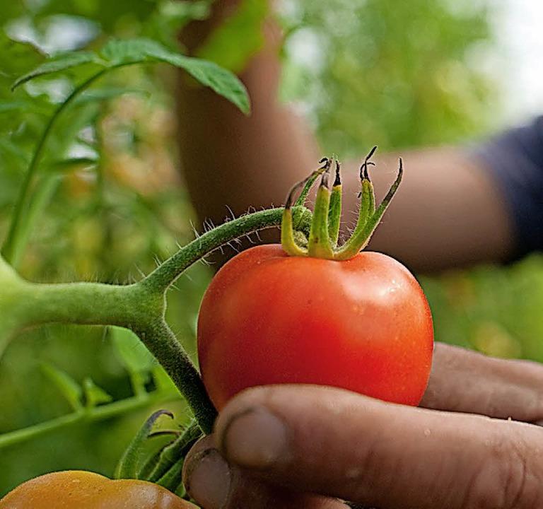 Handarbeit: Kleine Betriebe sollen laut der Agronauten produzieren und bilden.   | Foto: K.-D. Gabbert (dpa)