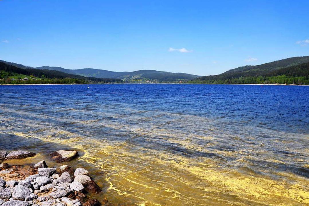 Auch der Schluchsee ist teils von gelben Schlieren überzogen.    | Foto: Kathrin Blum