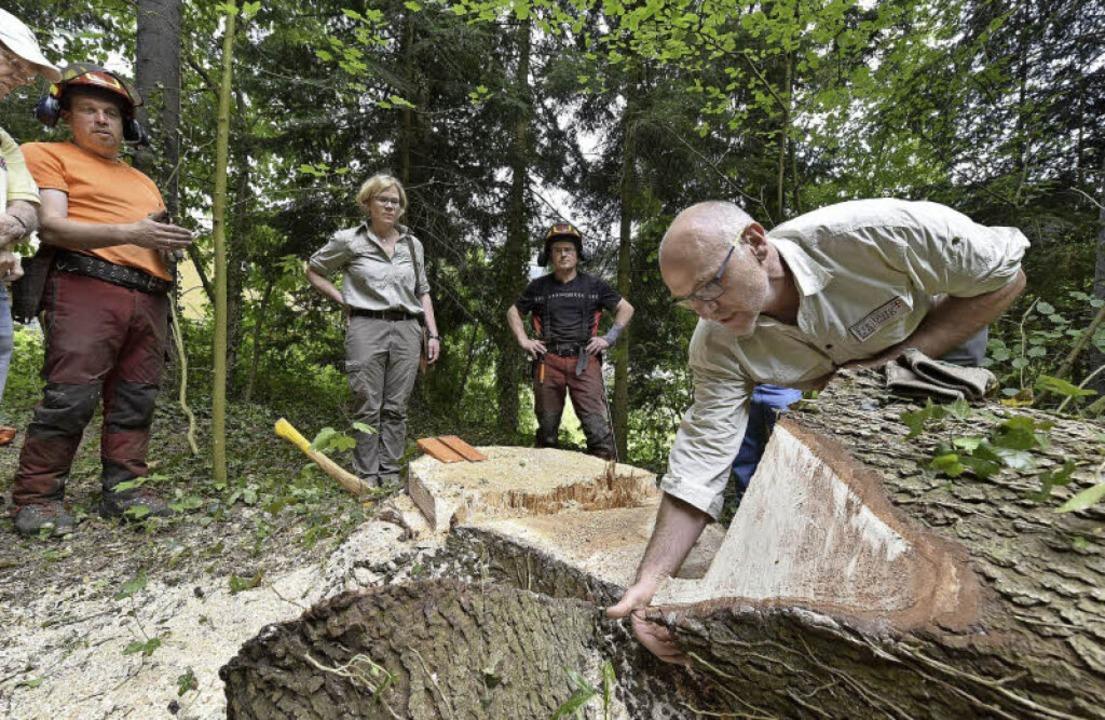 Forstwirt Klaus Echle (rechts) erklärt...ng, wie man einen Baum richtig fällt.     Foto: T. Kunz