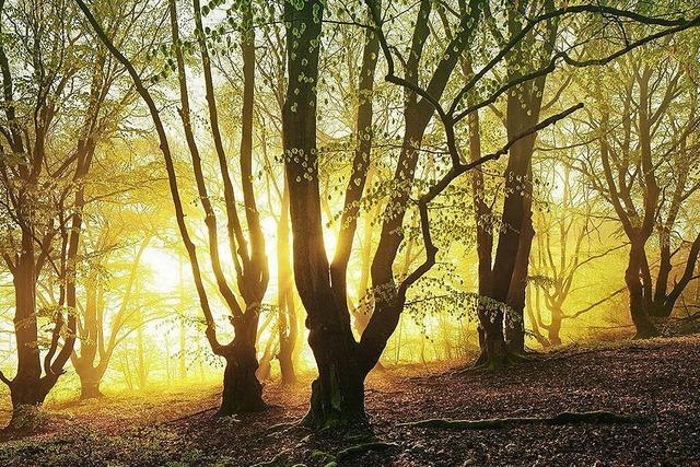 Buchtipp: Bildband Waldwelten