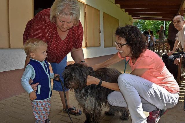 Impfen sorgt für gesunde Haustiere