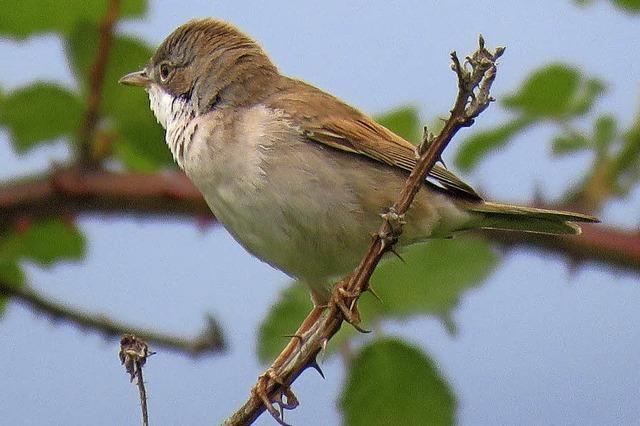 Die Rückkehr der Singvögel