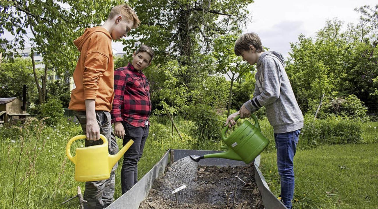 <BZ-FotoAnlauf>Experiment</BZ-FotoAnla...ngell-Schüler sind jetzt Soja-Bauern.   | Foto: Angell
