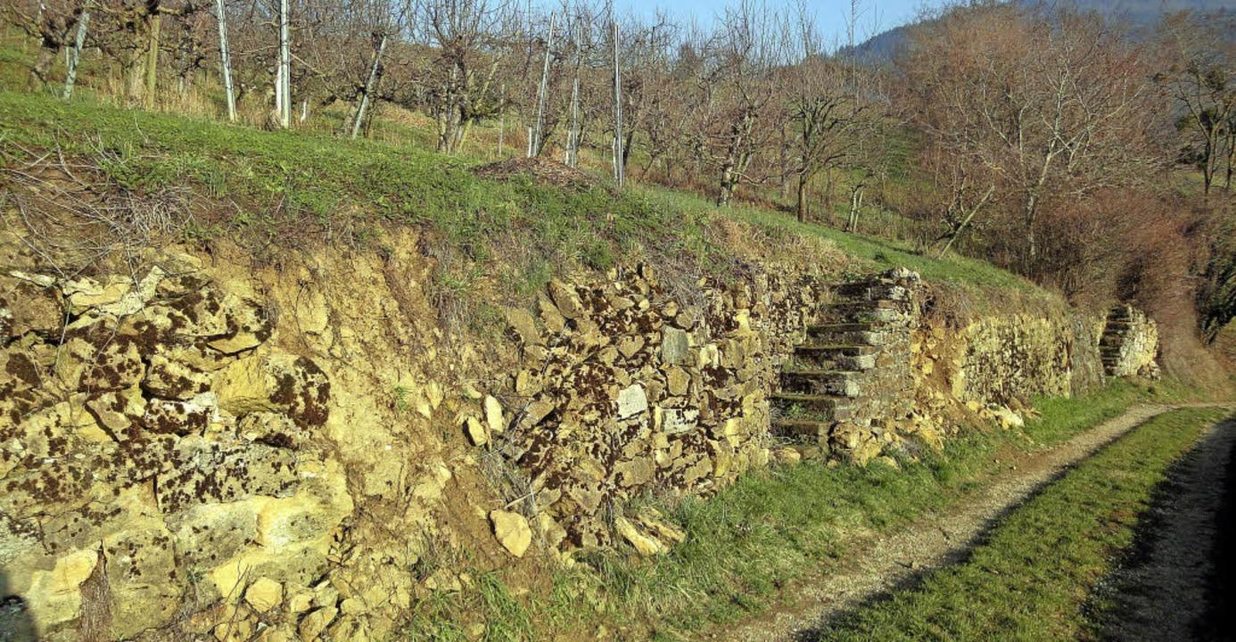 Trockenmauern am René-Schickele-Weg bei Badenweiler-Lipburg     Foto: Silke Hartenstein