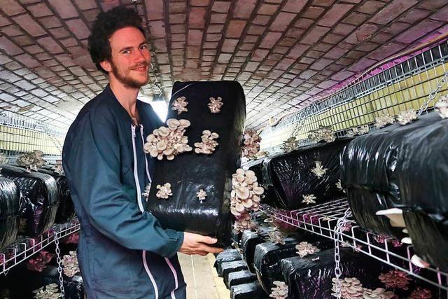 Start-up züchtet Pilze in früherem preußischen Bunker