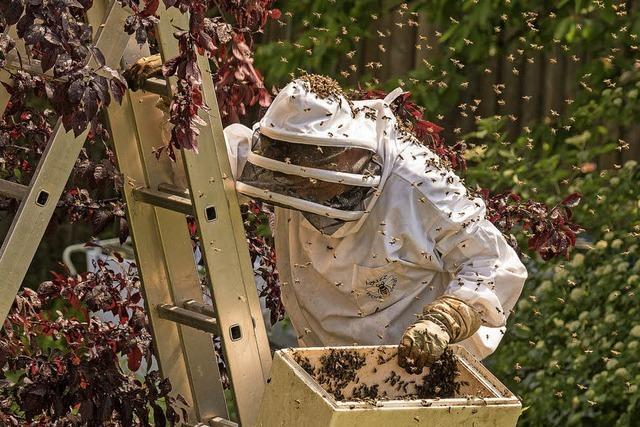 Schwarmzeit für Bienen