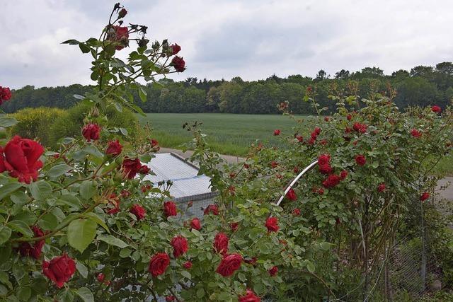 Zehn Hektar Bauland in Otterbach