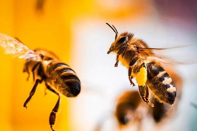 Experte erklärt, warum er den Begriff des Bienensterbens nicht mag