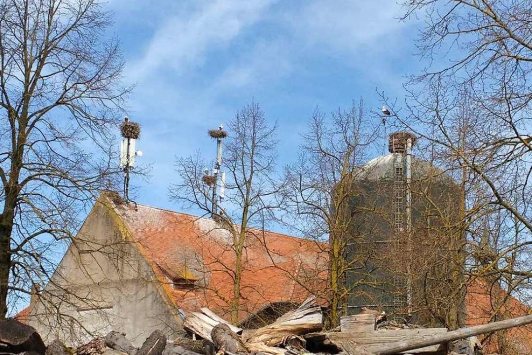 Auf dem Mundenhof-Verwaltungsgebäude g...n, mehrere davon auf Handysendemasten.    Foto: Margrit Heyn