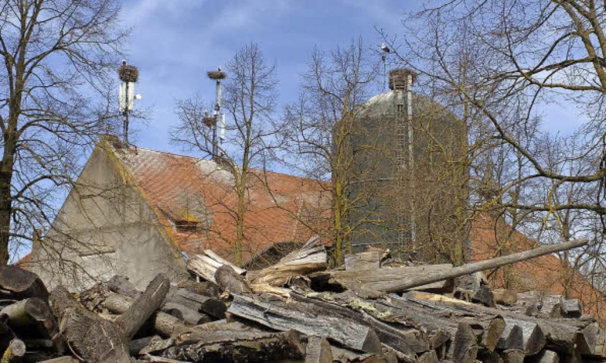 Auf dem Mundenhof-Verwaltungsgebäude g..., mehrere davon auf Handysendemasten.   | Foto: Margrit Heyn