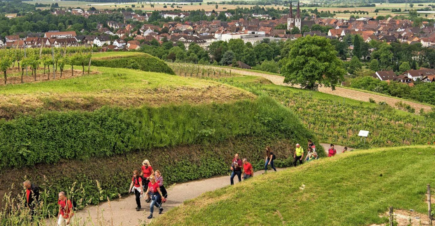 Von Kenzingen führte die Weinwanderung nach Wagenstadt.   | Foto: Werner Schnabl
