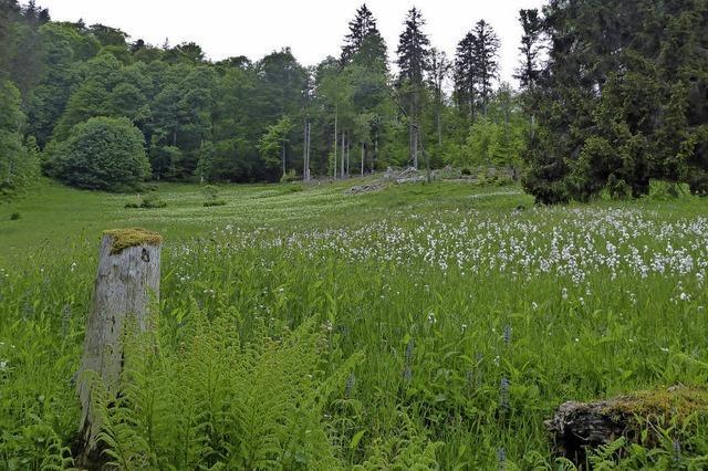 Entdeckungsreise in Fauna und Flora