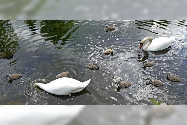Tierfamilienleben im Schlosspark