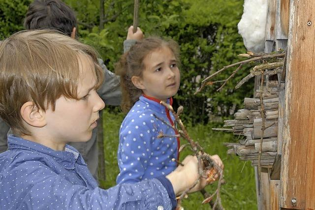 Kinder geben Insekten ein bisschen was zurück