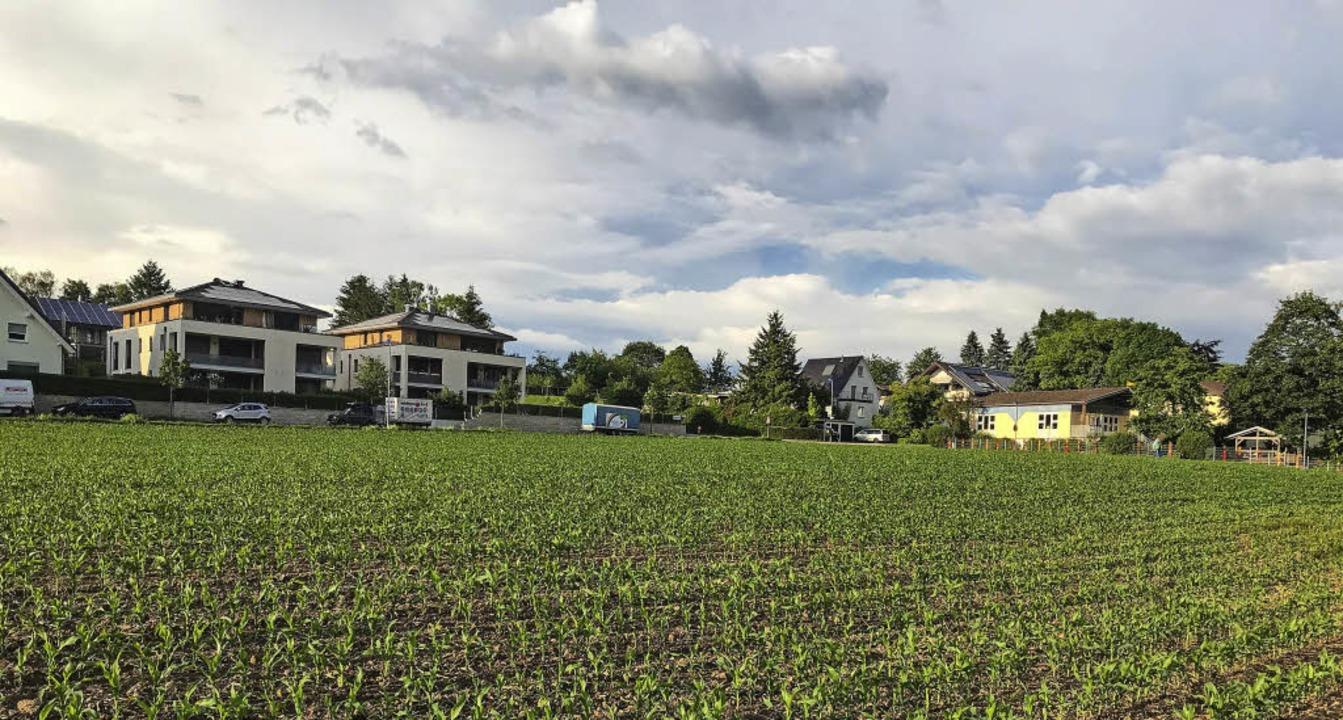 Noch wächst hier der Mais, doch schon ...te auf der Fläche eine Baustelle sein.    Foto: Gabriele Hennicke