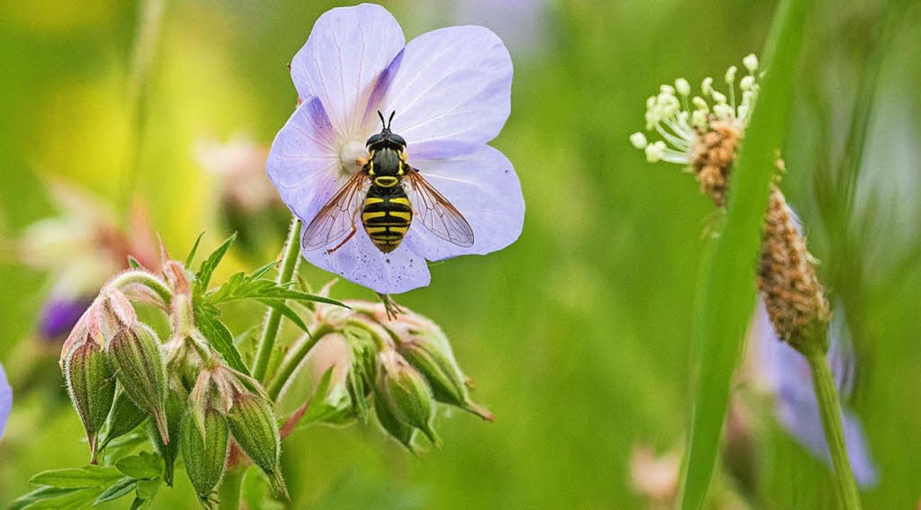 Gegen das Insektensterben will die Gemeinde nun vorgehen.   | Foto: dpa