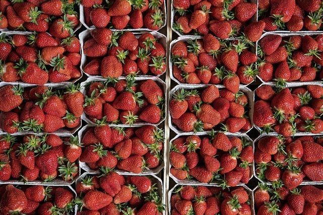 Erdbeeren & Spargel