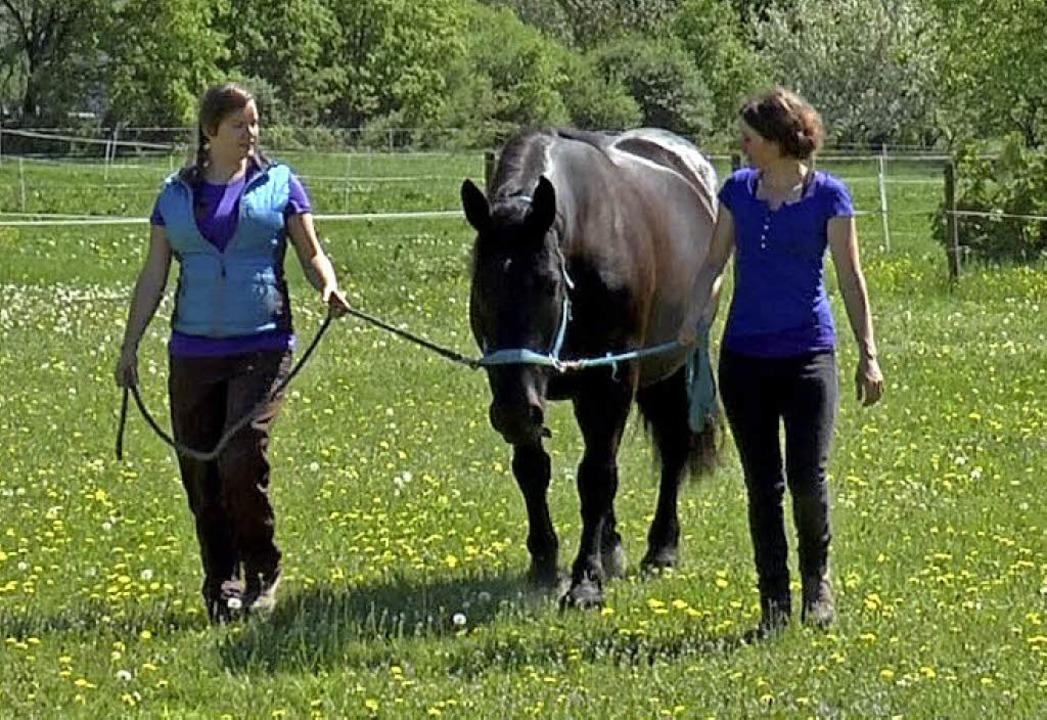 Pferde sollen bei der Genesung helfen.     Foto: Sigma-Zentrum