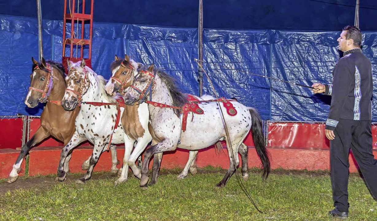 Daniel Weisheit zeigte den Zirkusbesuchern seine Pferdedressur.   | Foto: Chris Seifried