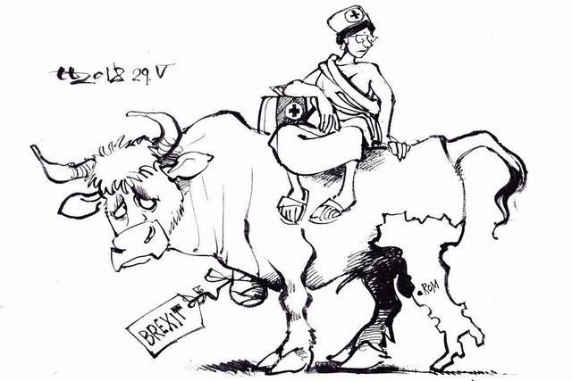 Stier mit Amputation und Gipsbein
