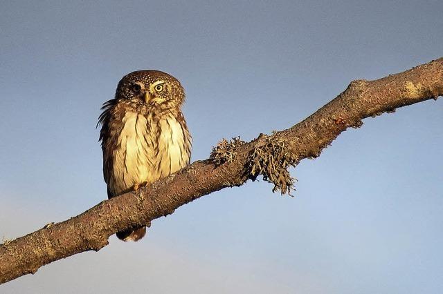 Dritter Feldberger Vogeltag