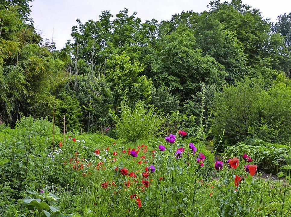 Im Kurpark ist ein grünes Paradies ent...rtens in den vor 20 Jahren angelegten.    Foto:  heg