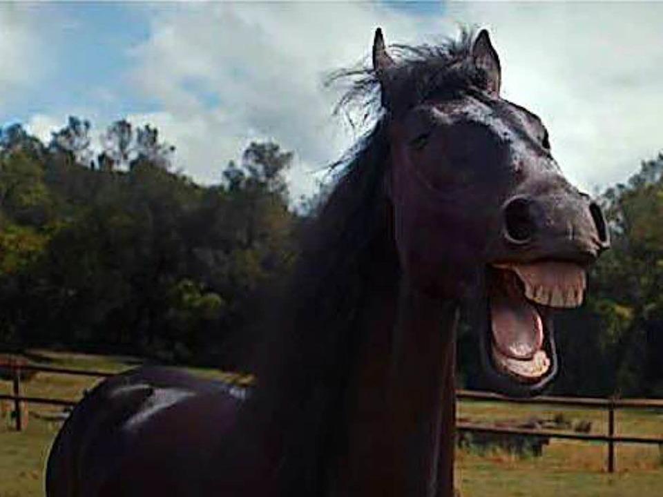 Ausgebüxtes Pferd besucht Campingplatz / Symbolbild  | Foto: YouTube