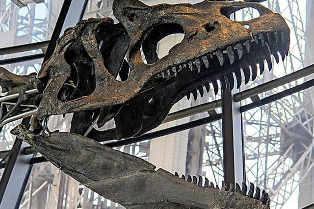 Zwei Millionen für Dino-Skelett