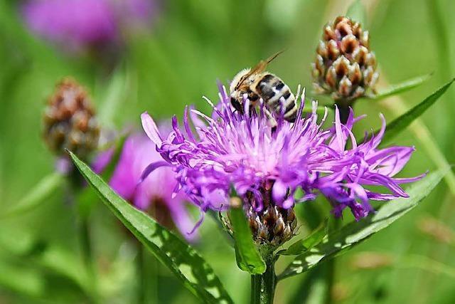 Steinen soll für Bienen und Insekten attraktiver werden