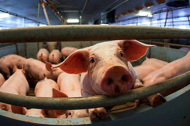 Verbraucher wollen wissen, was sie essen – höchste Zeit für ein Tierschutzlabel