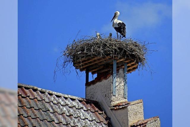 Nachwuchs im Nest